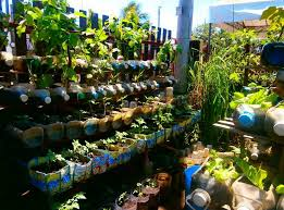 inspiring container gardening vegetables in the backyard decpot