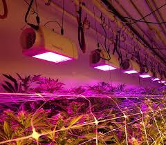 philips led grow light led grow light will have national standards led lighting blog