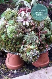 How To Make A Succulent Planter How To Make A Succulent Turtle Topiary Gardening In The Shade