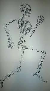 Pictures Of The Anatomy Of The Human Body Best 25 Skeleton Bones Ideas On Pinterest Human Skeleton Bones