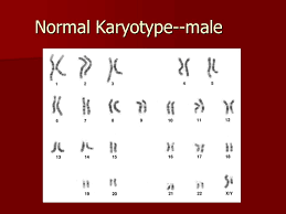 karyotypes worksheet the best and most comprehensive worksheets