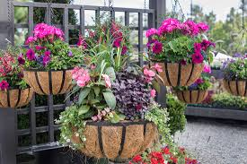 hanging basket plants for sun container gardens roger u0027s gardens