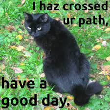 Good Luck Cat Meme - five funny cat memes and maze of the virgo sign au wildjackcasino com