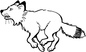 elegant fox coloring pages 92 about remodel coloring for kids with