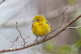 bounty of birds decorate houston arboretum for christmas houston