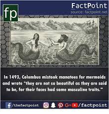 Mermaid Memes - 25 best memes about mermaids mermaids memes