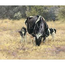 print motherly holstein cow and calf by