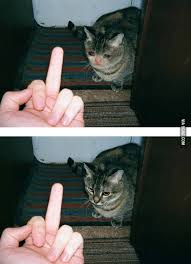 Middle Finger Cat Meme - the sad cat middle finger was fake i almost cried about it thank