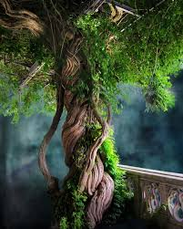 a vine tree how are your roots louisville