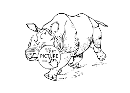 rhinoceros real animals coloring pages for kids printable free