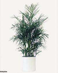 Air Purifying Plants 9 Air by List Of The 10 Best Plants For Cleaning Indoor Air Hgtv