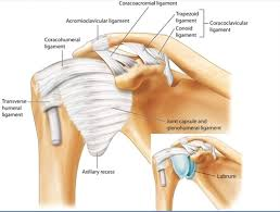 Tendons In The Shoulder Diagram How I Do It Ultrasound Guided Injection For The Shoulder Part 2