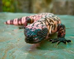program reptiles