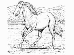 horse coloring pictures printable pages 528368 coloring pages