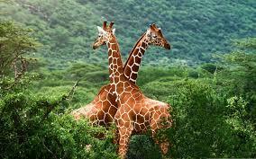 wildlife images Wildlife conservation mirpuri foundation jpg