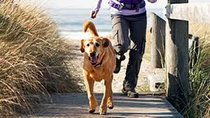 exercising with your dog 20 must have gadgets health