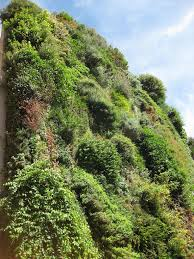 patrick blanc u0027s vertical garden in madrid buildipedia