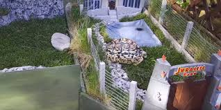 this miniature jurassic park is home to a fearsome pet tortoise