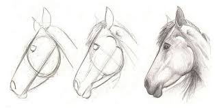 how to draw a horse dr odd