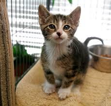 cat vaccinations veterinarians in covington rockdale animal