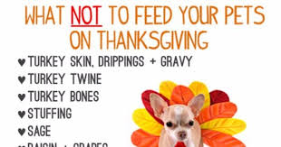 what not to feed your pet on thanksgiving i can has cheezburger