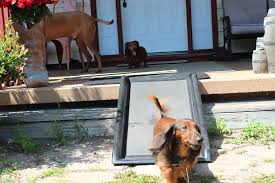 how to find the best dog ramp u2013 play safe pet stairs