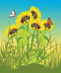 floral summer card with sunflower and butterfly stock vector