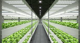 what is the best lighting for growing indoor the 5 best led grow lights to use for indoor plants and