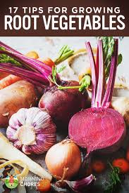 Tips For Planting A Vegetable Garden by 17 Tips For Growing Harvesting And Storing Root Vegetables