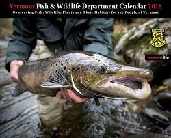 Vermont wildlife images Vermont fish wildlife home facebook
