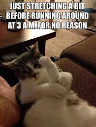 Silly Cat Memes - 37 of the best cat memes the internet has ever made