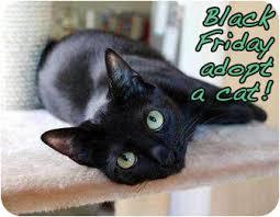 black friday pet adoption black friday shelter pets adoptapet com blog