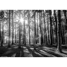 rainbow black white woodland forest mural photo giant wall decor r223 rainbow black amp white woodland forest mural photo giant wall decor r223