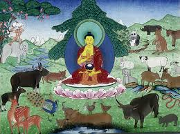 what the buddha said about animal rights why it s in our