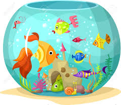 aquarium fish stock photos royalty free aquarium fish images and