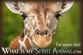giraffe facts songs movies u0026 trivia mammal animal facts