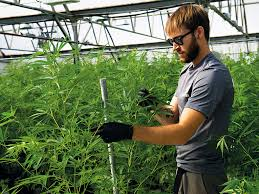 Colorado Travel Industry images Colorado is yet to fully embrace its cannabis tourism industry jpg