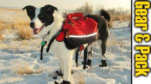 kado s pack gear hiking with dogs
