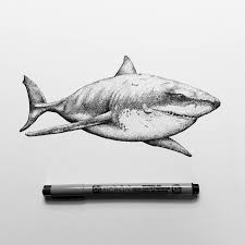 25 beautiful shark drawing ideas on pinterest drawings of