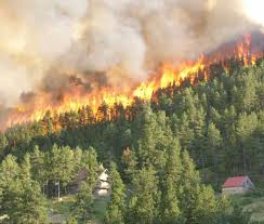 North Bay Mnr Fire by Forest Fires Colorado Forest Fire Forest Fires Pinterest