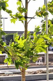 l a county arboretum botanic garden plant info columbia