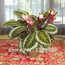 online get cheap indoor flowering plants low light aliexpress com