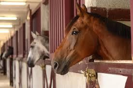 vergleichen zahlt sich aus die auto durch pferd beschädigt zahlt die pferdehaftpflicht vs