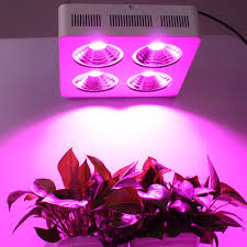 most efficient grow light sale in factory cob full spectrum 800w led grow light for