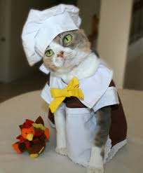 Pet Cat Halloween Costumes Catturkey3 824x1000 13 Pictures Of Dogs And Cats Dressed Up For