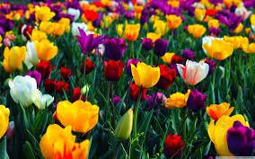 spring wallpapers hd download free pixelstalk net