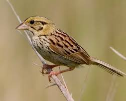 mn native plants greenspace endangered bird reliant on non native plants needs a