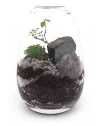 one more cool terrarium or wardian case terr