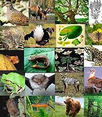 species profiles biomodel info biodiversity modelling species