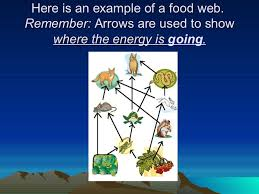South Carolina what travels through a food chain or web images Food chains and food webs jpg